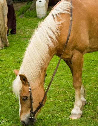 loss of use insurance for horses